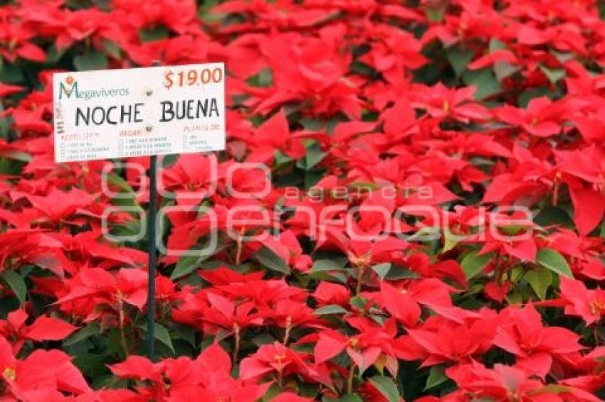 Agencia enfoque flor de nochebuena viveros atlixco for Viveros de plantas en atlixco